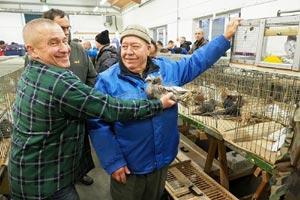 Выставка голубей коппенгаген