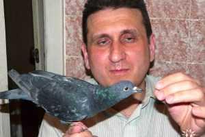 Любитель голубей