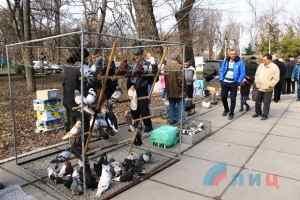 Выставка голубей в Луганске