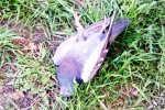 Смерть и голуби
