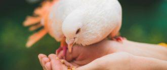 голуби Оренбурга