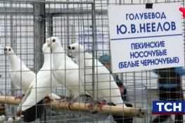 выставка голубей в Тюмени