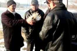 Ярмарка голубей в Северодонецке