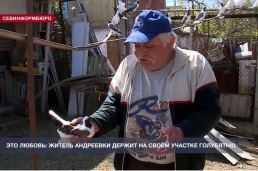 Голуби Крыма