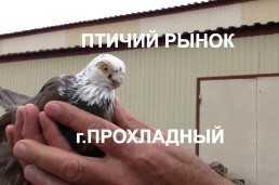 Птичий рынок г.Прохладный