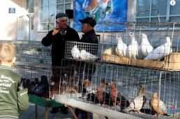 Выставка голубей в Черниговке