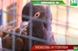 Выставка голубей в Казани