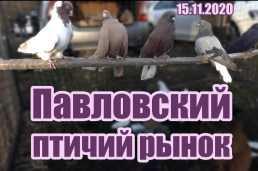 Птичий рынок в Павловске