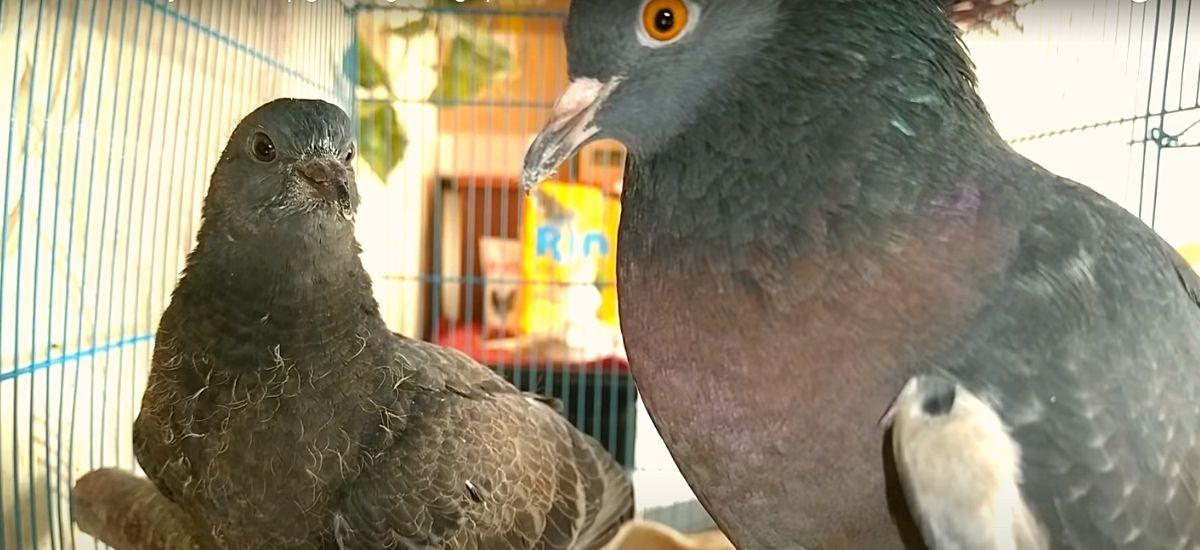 Птенец с мамой