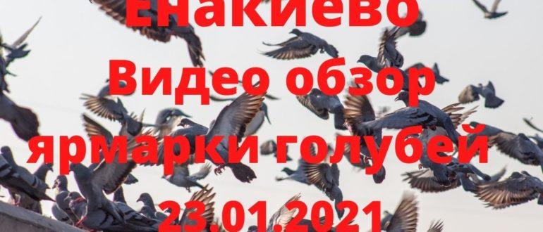 Видео обзор ярмарки голубей в Енакиево от 23 января 2021года