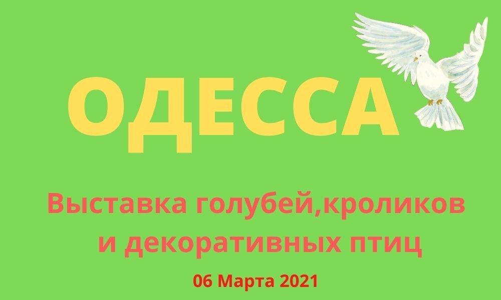 Выставка голубей, кроликов и декоративных птиц, Одесса март 2021