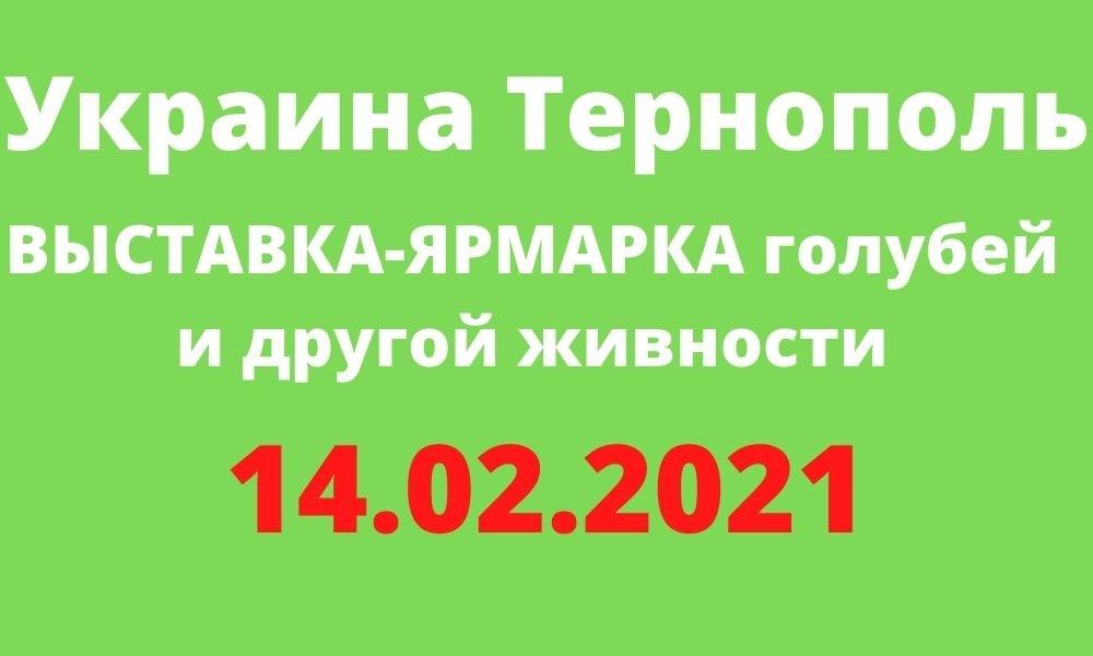 ВЫСТАВКА-ЯРМАРКА голубей и другой живности Тернополь 14.02.2021