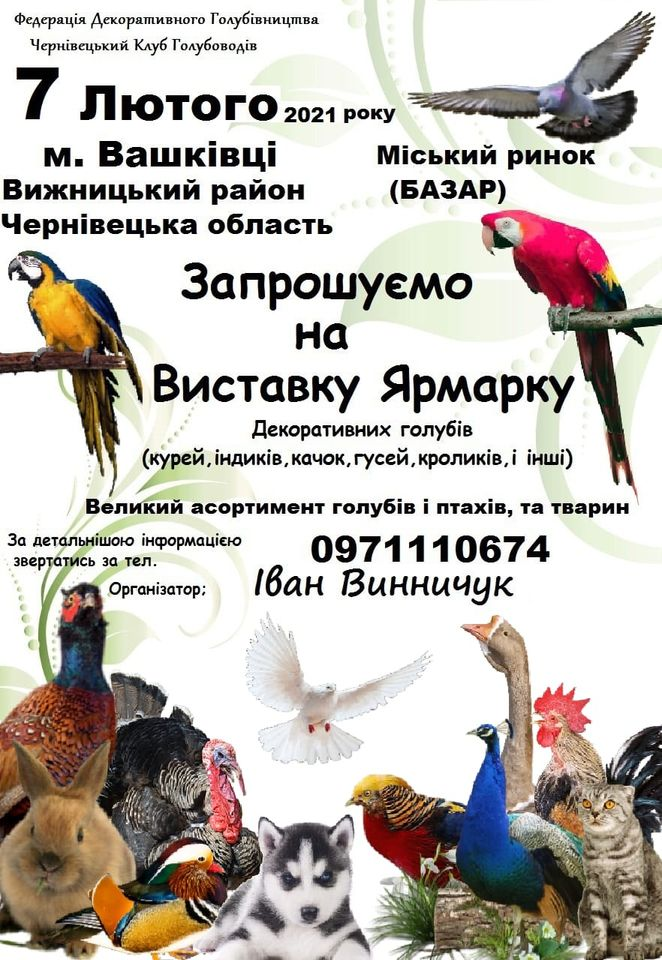 Выставка-ярмарка: голуби, гуси, утки и другие 7.02.2021 Вашковцы Украина