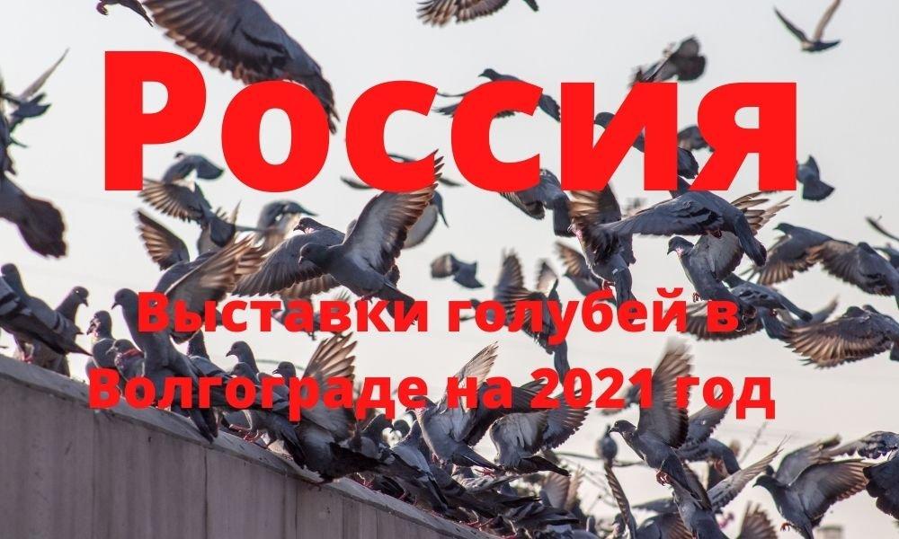 Выставки голубей в Волгограде на 2021 год (Россия)