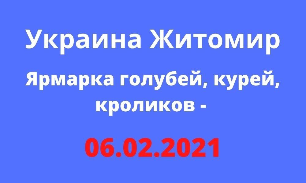 Ярмарка голубей, курей, кроликов - 06.02.2021 Житомир