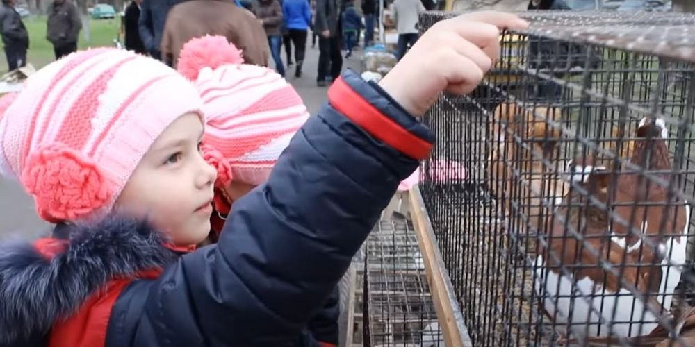 Ярмарка сельскохозяйственной и декоративной живности 04.04.2021 - Тульчин