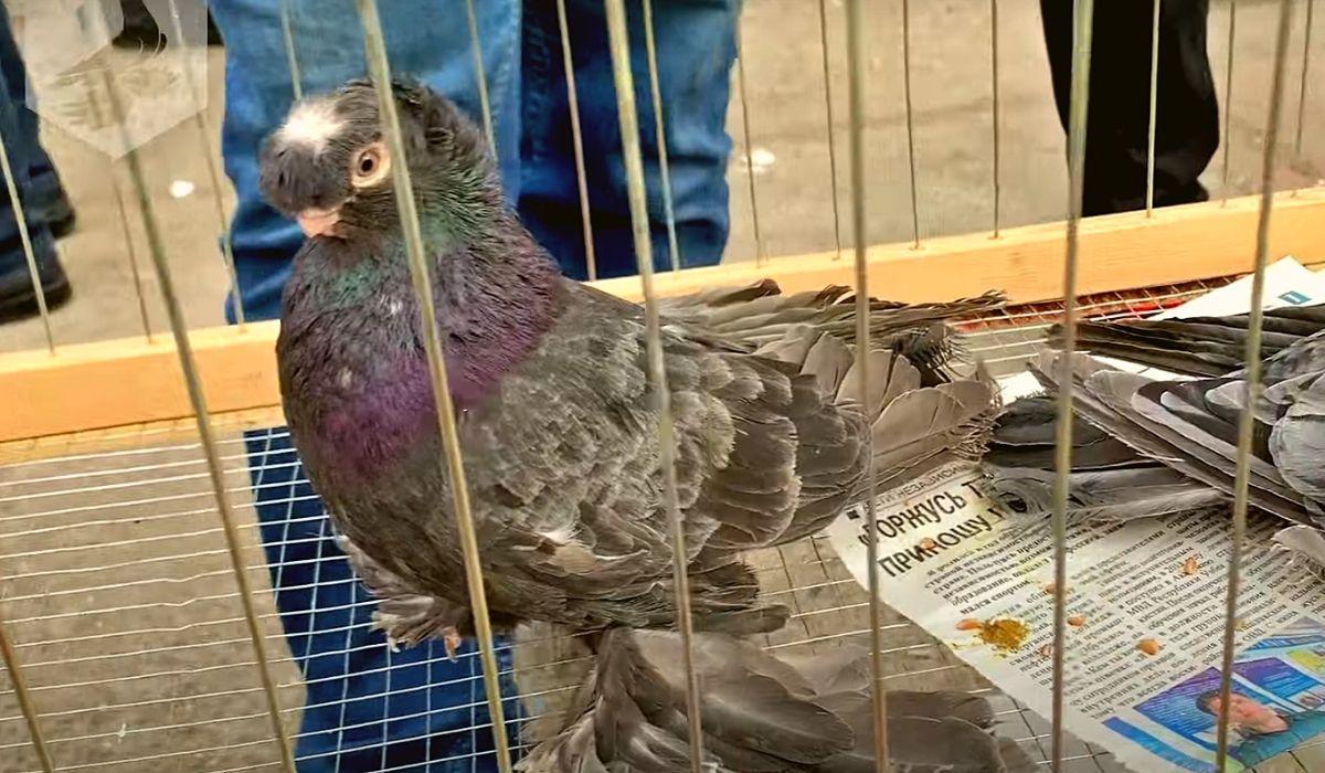 Обзор птичьего рынка в городе Ташкент 06.02.2021
