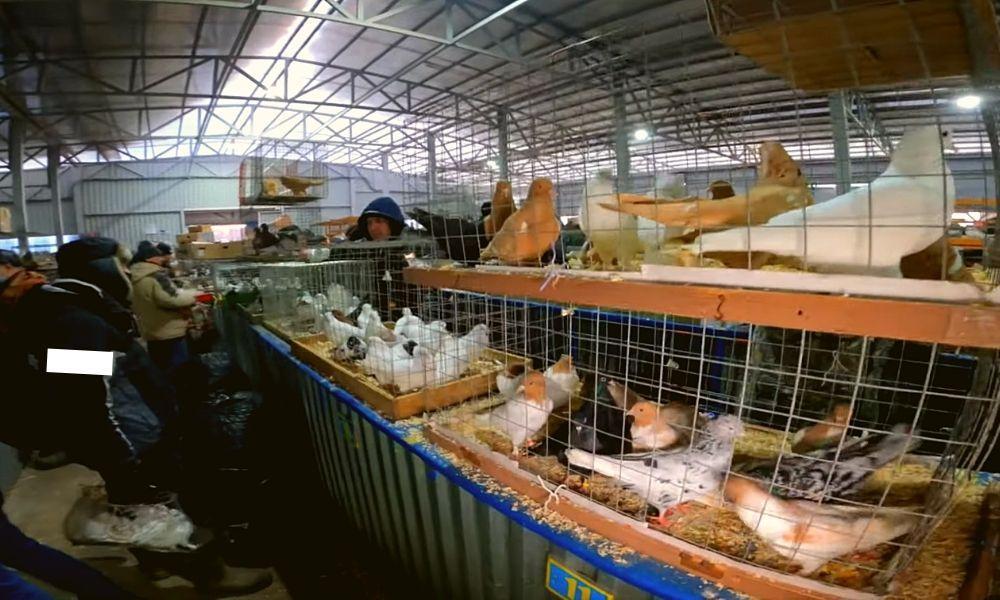 Видео обзор ярмарки голубей в Москве 6 марта 2021 года